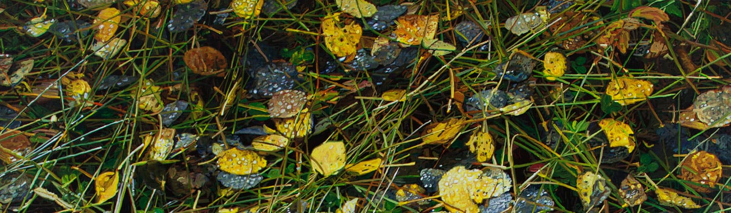 photograph leaves and grass